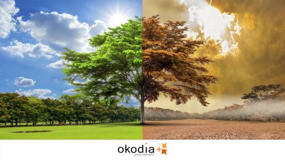 imagen de arbol en primavera y otoño